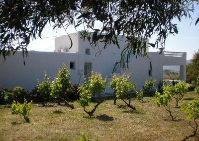 Vines of Mimihouse, Naoussa, Paros, Greece
